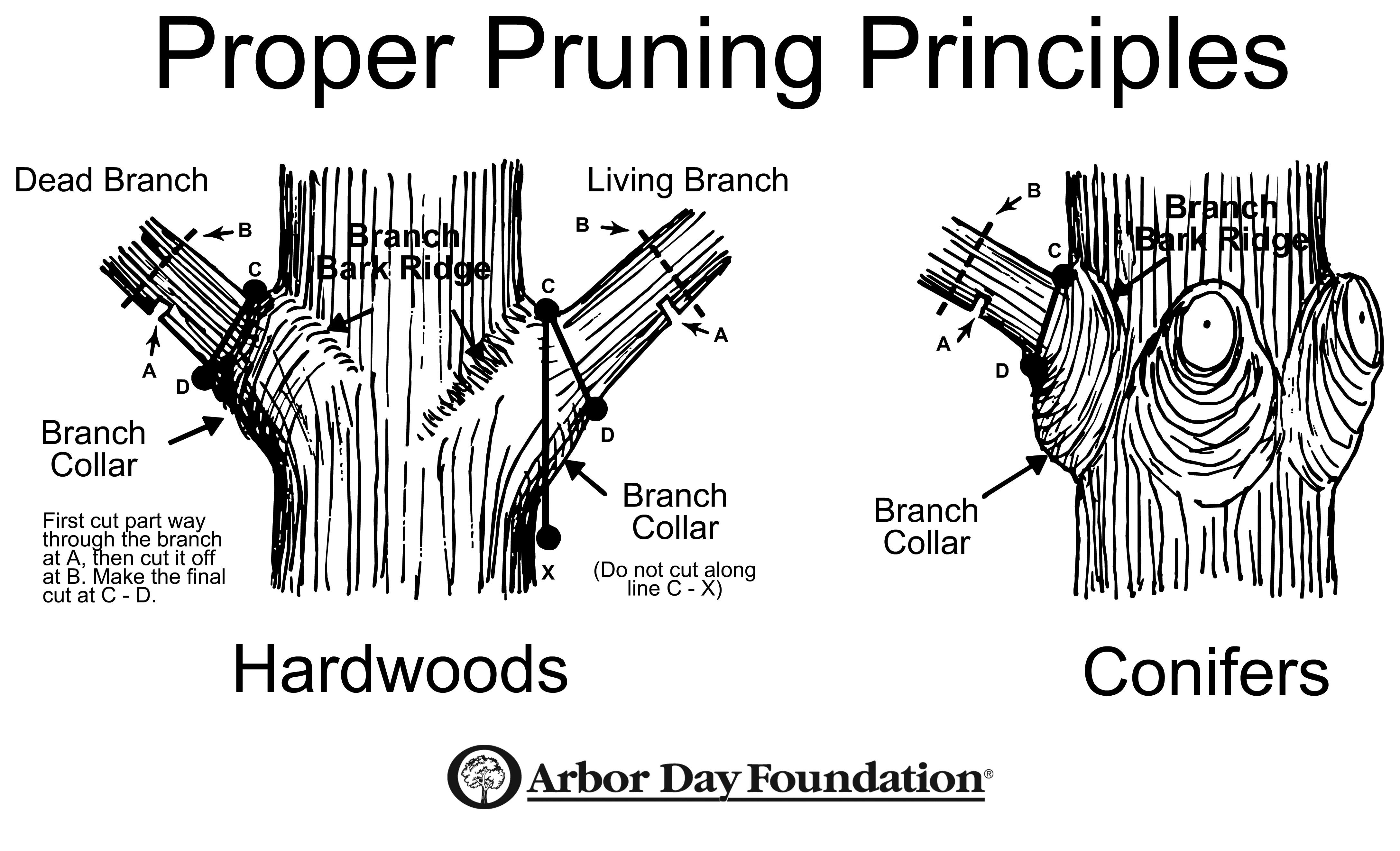 tree and shrub pruning guide