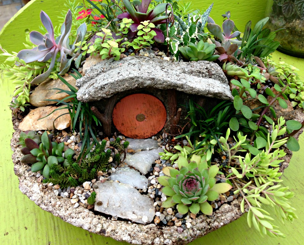 Fairy garden how to fairview garden center Fairy garden plants