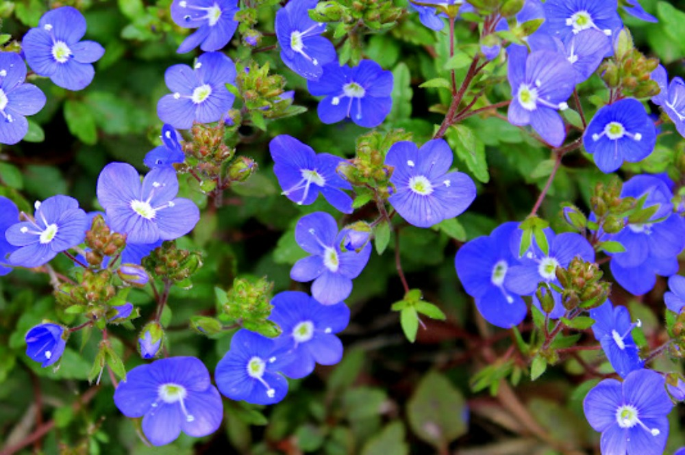 Top 5 Early Spring Perennials Fairview Garden Center