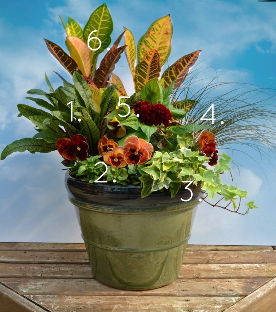 Fall Container Garden with Croton, Rumex and Celosia