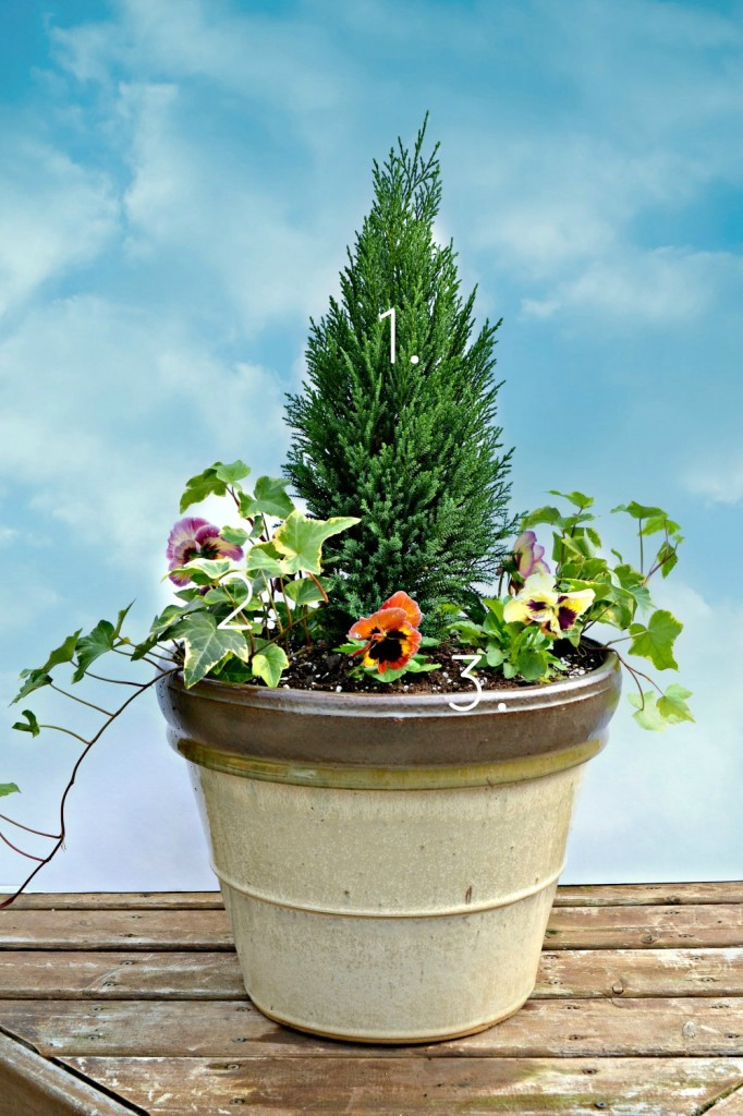 Fall Container Garden with Shorty Leyland Cypress evergreen centerpiece